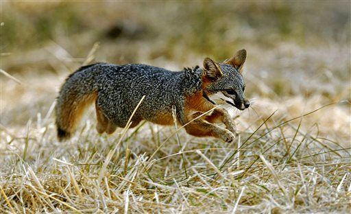 No One Thought Foxes Could Be Tamed for Good. Scientists May Have Proven They Can