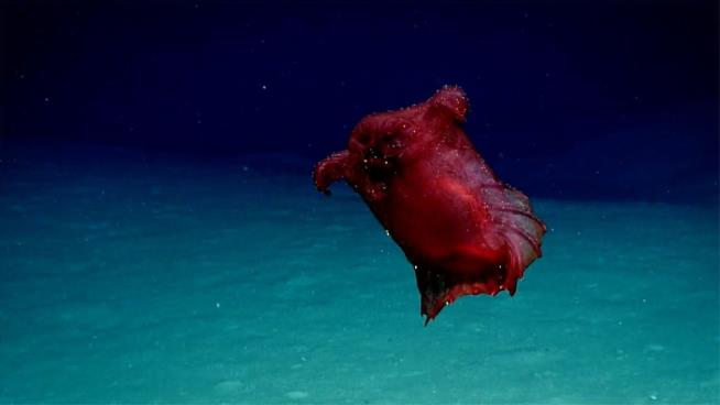 Elusive 'Headless Chicken Monster' Captured on Video in Antarctic Ocean