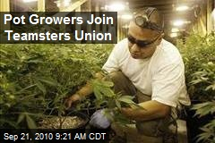 Pot Growers Join Teamsters Union