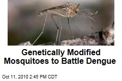 Genetically Modified Mosquitoes to Battle Dengue