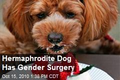 Hermaphrodite Dog Gets Gender Reassignment Surgery