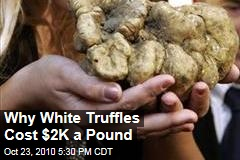 Why White Truffles Cost $2K a Pound
