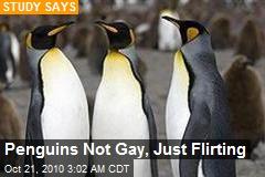 Study: Penguins Not Gay, Just 'Flirting'