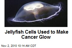 Jellyfish Cells Used to Make Cancer Glow