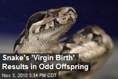 Snake's 'Virgin Birth' Results in Odd Offspring