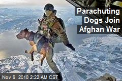 Parachuting Dogs Join Afghan War