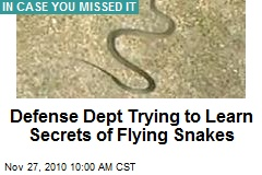 Defense Dept Trying to Learn Secrets of Flying Snakes