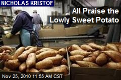 All Praise the Lowly Sweet Potato