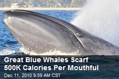Great Blue Whales Scarf 500K Calories Per Mouthful