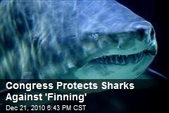 Congress Protects Sharks Against 'Finning'