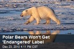Polar Bears Won't Get 'Endangered' Label