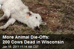 More Animal Die-Offs: 200 Cows in Wisconsin