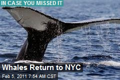 Whales Return to NYC