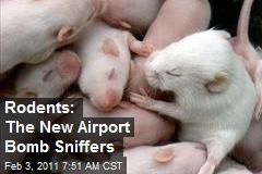 Rodents: The New Airport Bomb Sniffers