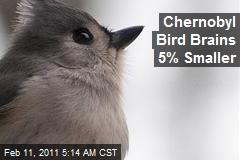 Chernobyl Bird Brains 5% Smaller