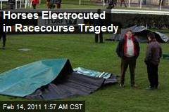 Horses Electrocuted in Racecourse Tragedy