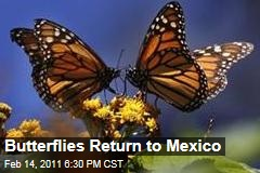 Butterflies Return to Mexico