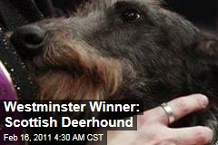 Westminster Kennel Club Dog Show Winner Is Scottish Deerhound