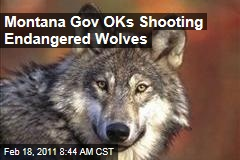 Montana Governor Brian Schweitzer OKs Shooting Endangered Wolves