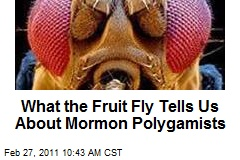What the Fruit Fly Tells Us About Mormon Polygamists