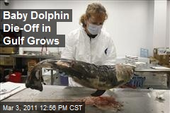 Baby Dolphin Die-Off in Gulf Grows
