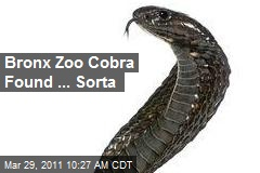 Bronx Zoo Cobra Found ... Sorta