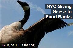 Geese Killed in New York City: Euthanized Birds Go to Hungry Instead of Landfills