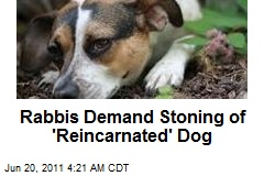 Rabbis Demand Stoning of 'Reincarnated' Dog