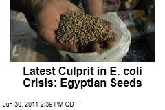 Egypt's Fenugreek Seeds Blamed in Europe's E. coli Crisis