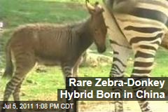 Zedonk, Zebrass, Zonkey: Rare Zebra-Donkey Hybrid Born in China