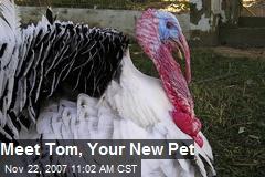 Meet Tom, Your New Pet