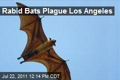Rabid Bats Plague Los Angeles