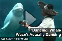 'Dancing' Beluga Whale Was Trained to Move: Whales Are Naturally Curious