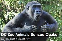 DC Zoo Animals Sensed Quake