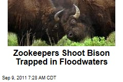 Hersheypark's ZooAmerica: Zookeepers Shoot Bison Trapped in Floodwaters
