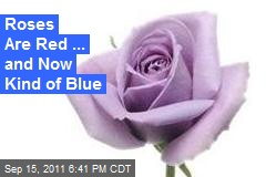 Roses Are Red ... and Now Kind of Blue
