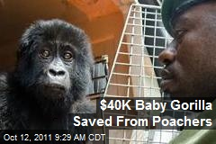 Poached Baby Gorilla Saved With $40K