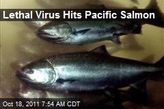 Lethal Virus Hits Pacific Salmon