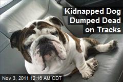 Kidnapped Dog Dumped Dead on Tracks