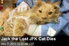Jack the Lost JFK Cat Dies