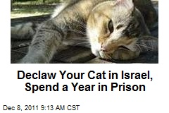 Declaw Your Cat in Israel, Spend a Year in Prison