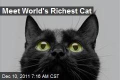 Meet World's Richest Cat