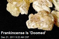 Frankincense Is 'Doomed'
