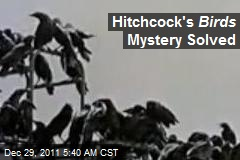 Hitchcock's Birds Mystery Solved