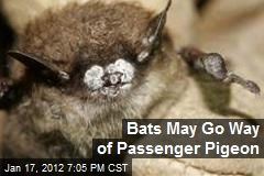 Bats May Go Way of Passenger Pigeon