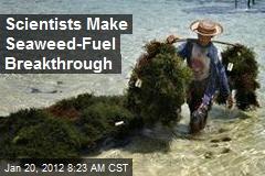 Scientists Make Seaweed-Fuel Breakthrough
