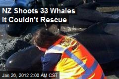 33 Restranded Whales to Be Killed