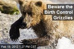 Beware the Birth Control Grizzlies