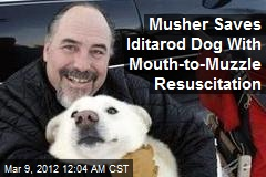 Musher Saves Iditarod Dog With Mouth-to-Muzzle Resuscitation