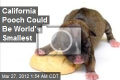 Calif. Pooch Could Be World's Smallest